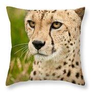 Cheetah Acinonyx Jubatus Big Cat  Throw Pillow
