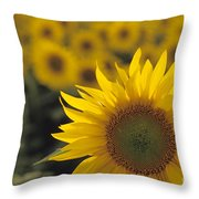 Close-up Of Sunflowers In A Field Throw Pillow