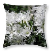 Dianthus Superbus - White Throw Pillow