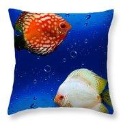 Discus Fish Throw Pillow
