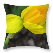 Dwarf Cyclamineus Daffodil Named Jet Fire Throw Pillow