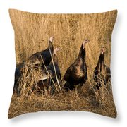 Eastern Wild Turkeys Throw Pillow