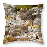Falkland Steamerduck Throw Pillow