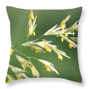 Flowering Brome Grass Throw Pillow