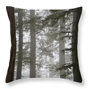 Foggy Coast Redwood Forest Throw Pillow