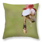 Honey Bee Collecting Nectar From An Apple Blossom Throw Pillow