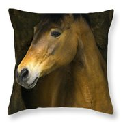 In The Stable Throw Pillow