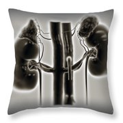 Kidneys And Adrenal Glands Throw Pillow