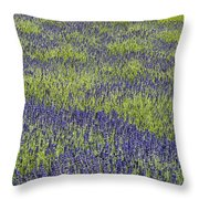 Lavendar Field Rows Of White And Purple Flowers Throw Pillow