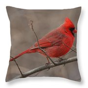 Male Northern Cardinal Throw Pillow
