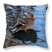 Mallard Duck  Throw Pillow