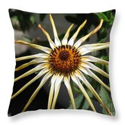 Osteospermum Named African Moon Throw Pillow