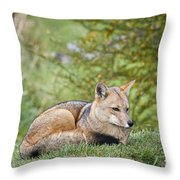 Patagonian Red Fox Throw Pillow