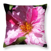 Portulaca Named Sundial Peppermint Throw Pillow