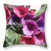 Pulmonaria Named Raspberry Splash Throw Pillow