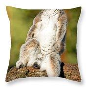 Ring Tailed Lemur Throw Pillow