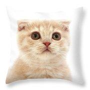 Scottish Fold Creme Throw Pillow