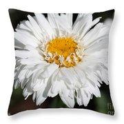 Shasta Daisy Named Paladin Throw Pillow
