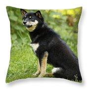 Shiba Inu Dog Throw Pillow
