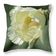 Single Buttercream Hollyhock Throw Pillow