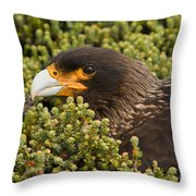 Striated Caracara Throw Pillow
