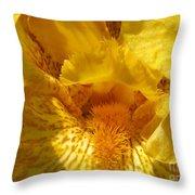 Tall Bearded Iris Named Saharan Sun Throw Pillow