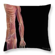 The Musculoskeletal System Throw Pillow