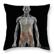 The Psoas Muscles Throw Pillow