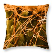 Trichophyton Fungus, Sem Throw Pillow
