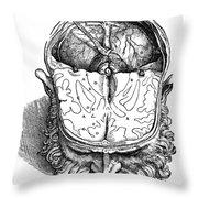 Vesalius: Brain, 1543 Throw Pillow