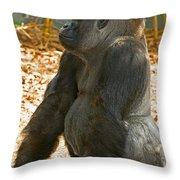 Western Lowland Gorilla Male Throw Pillow