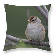 Whitecrowned Sparrow Throw Pillow