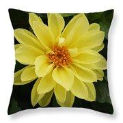 Yellow Dahlia Throw Pillow