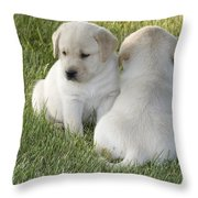 Yellow Labrador Puppy Throw Pillow by Linda Freshwaters Arndt