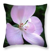 Zonal Geranium Named Tango Light Orchid Throw Pillow