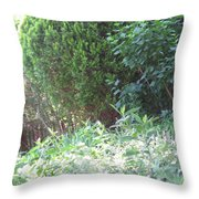 Camera Peak Thru Nature Buy Faa Print Products Or Down Load For Self Printing Navin Joshi Rights Man Throw Pillow