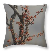 569 Throw Pillow