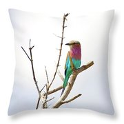 African Birds Throw Pillow