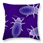 Bed Bugs Cimex Lectularius Throw Pillow