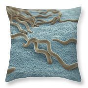 Borrelia Burgdorferi Throw Pillow