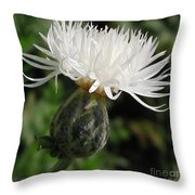 Centaurea Named The Bride Throw Pillow