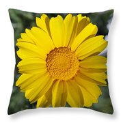 Crown Daisy Flower Throw Pillow