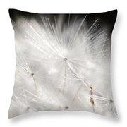Dandelion Backlit Close Up Throw Pillow
