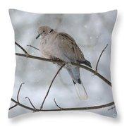 Eurasian Collard Dove Throw Pillow