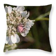 Flower Crab Spider Throw Pillow