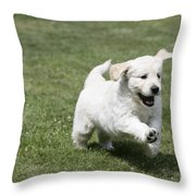 Golden Retriever Puppy Throw Pillow