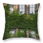 6 Ivy Windows Throw Pillow
