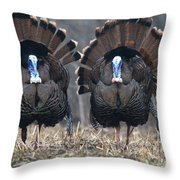 Jake Eastern Wild Turkeys Throw Pillow