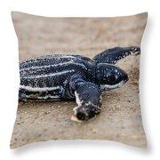 Leatherback Sea Turtle Hatchling Amelia Island Florida Throw Pillow