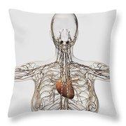 Medical Illustration Of Female Throw Pillow